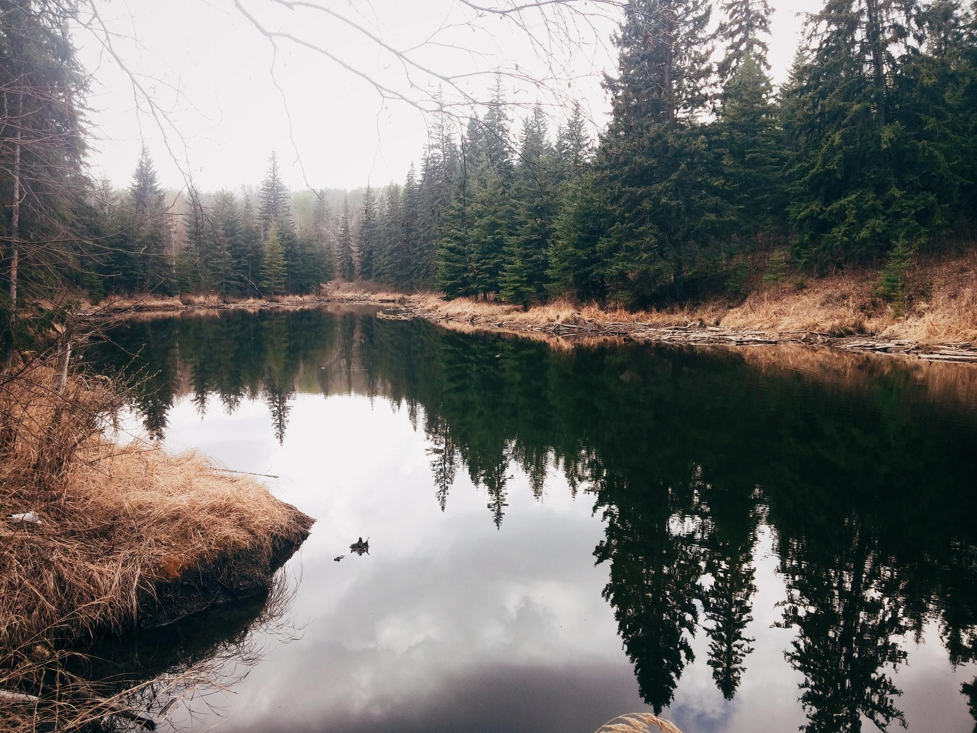 Edmonton Alberta lake and trees